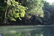 Indian River op Dominica